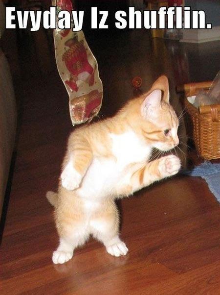 Dancing Cat Meme - funny dancing cats memes