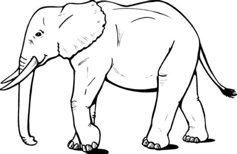 elephant coloring pages pdf elephant sketch printable free printables