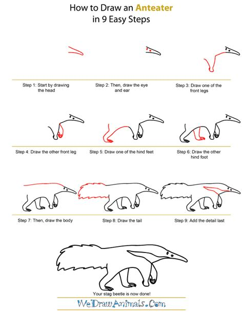 draw  anteater