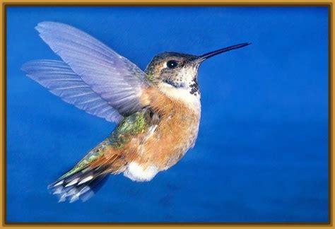 fotos de aves exoticas para imprimir archivos imagenes imagenes de aves exoticas con sus nombres archivos