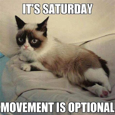 Grumpy Cat Good Morning Meme - it s saturday pictures photos and images for facebook