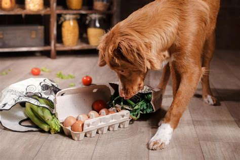 can dogs eat brocoli these therapy dogs will make you cry and believe in again dogpack