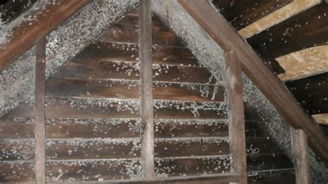 Black Mold In Attic - finding black mold in attic here s how to remove it