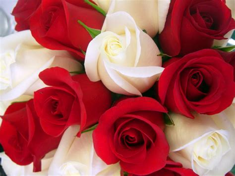 themes rose download love rose wallpapers rose wallpaper