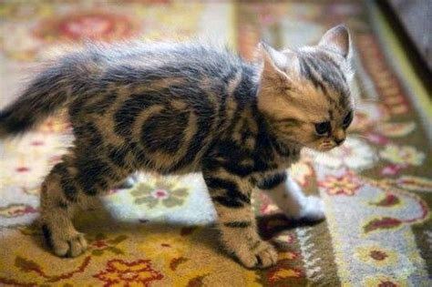 cat pooping on rug carpet stain remover recipe
