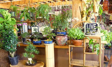 indoor gardening  beginners basics
