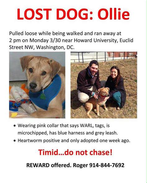 missing why dogs go missing and how to find them books looking for lost threatened with 750 000