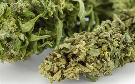 come coltivare cannabis in casa guide alla coltivazione di cannabis