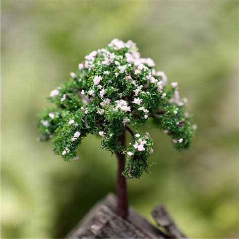 china doll plant for sale buy wholesale radermachera sinica from china