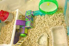 Hedgehog Cages Petsmart – 1000  images about Hamster on Pinterest   Hamsters