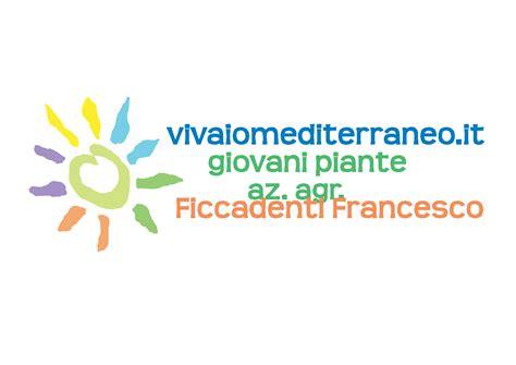 piante mediterranee da vaso piante mediterranee da ricoltivare vivaio mediterraneo