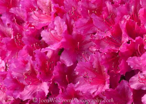 Flowers For Mother S Day flowers pretty in pink 22 joen wolfrom photography