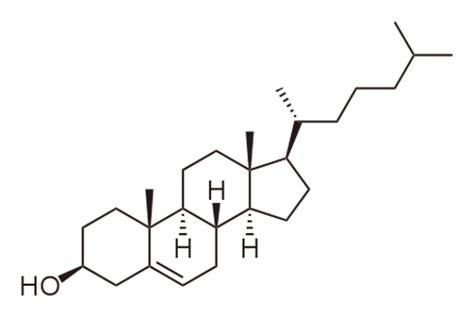 progesterone naturale alimenti lipidi bioitas