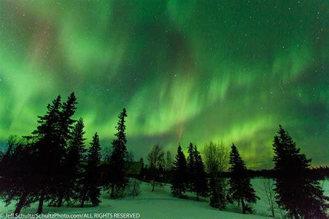 northern lights alaska 2017 northern lights 300 sled dog race aurora borealis