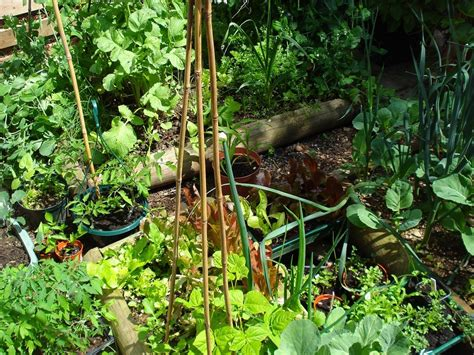 How To Plant Vegetable Garden How To Plant Vegetable Garden