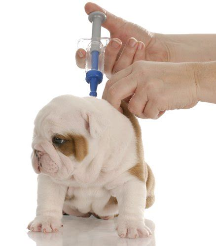 what of do puppies need what do puppies need and exact puppy vaccination schedule