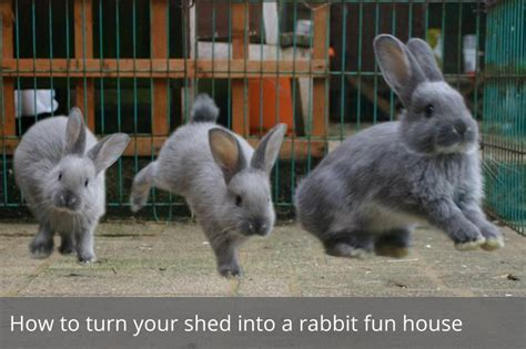 When Do Rabbits Shed by How To Turn Your Shed Into A Rabbit House Waltons