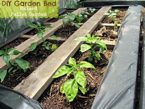 pallet raised garden bed diy pallet garden how to make raised wood pallet garden bed