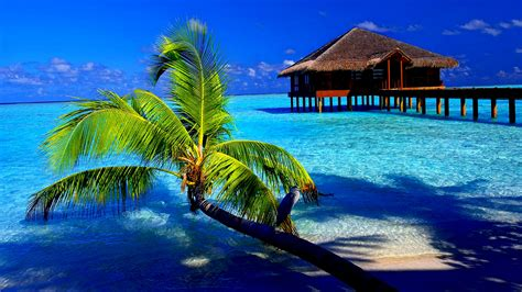computer wallpaper tropical tropical background latest hd wallpapers
