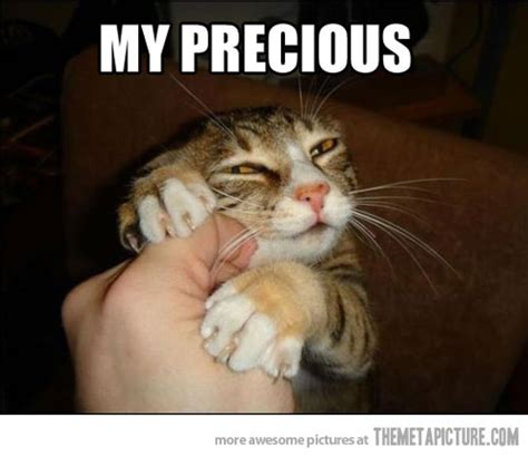 Funny Kitty Memes - my precious cat meme cat planet cat planet