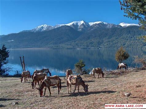 Rara All rara tal nepal all pictures photos