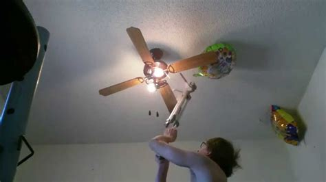 Ceiling Fan Turns by Superior Cat On Ceiling Fan Flying Cat On Ceiling Fan