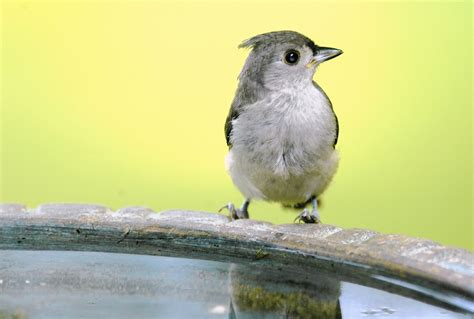 gardening with zika scare how to keep birdbaths safe