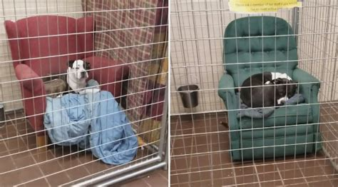 animal shelter   rescue dogs big comfy