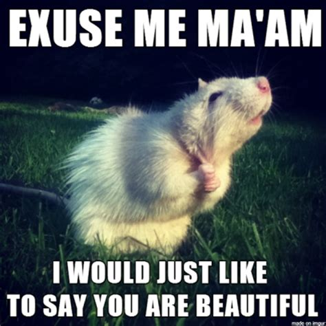 Funny Romantic Memes - complementary rat meme is a little shy when it comes to