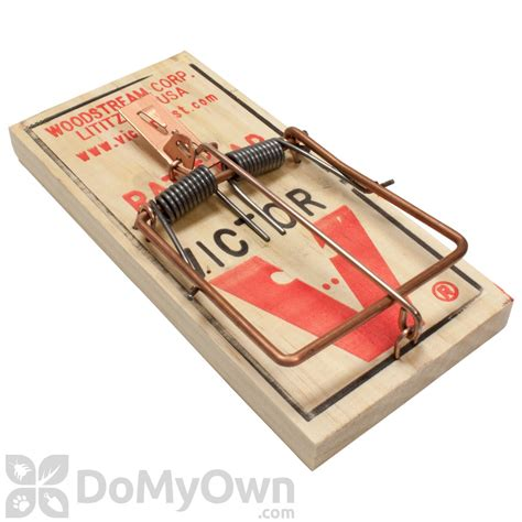 mouse benching mouse trap victor rat trap
