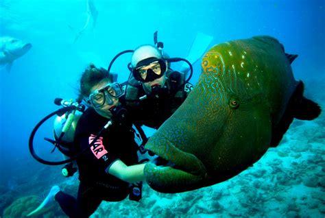Gopro Di Langkawi scuba diving port jetty yorke peninsula south australia australia