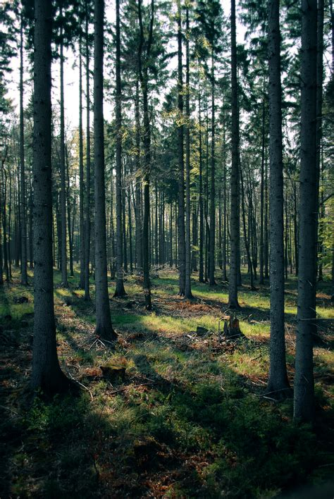 tumblr themes free forest forest backgrounds tumblr www imgkid com the image kid