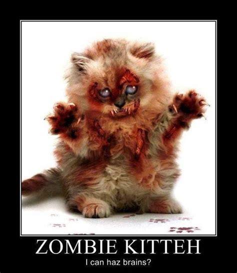 imagenes chistosas zombie gato zombie gatos chistosos imagenes chistosas fotos
