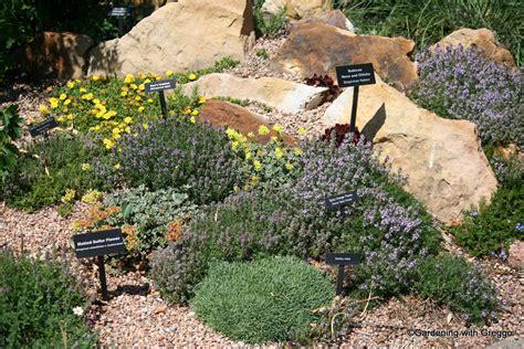 Small Backyard Ideas No Grass Gardening With Greggo In Conclusion Xeriscape Demo