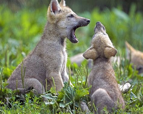 animales animales imagenes animales omn 237 voros chainimage