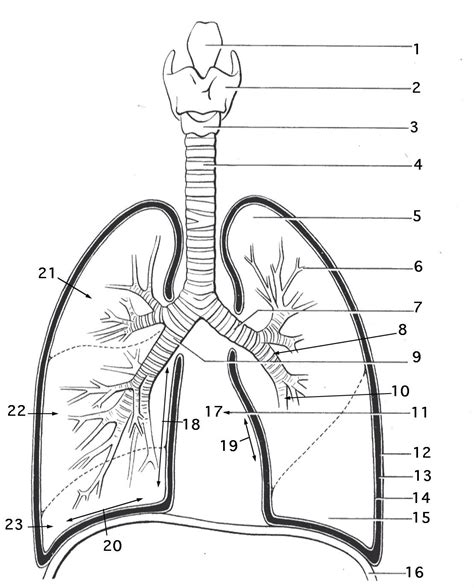 printable coloring pages respiratory system respiratory system coloring pages az coloring pages