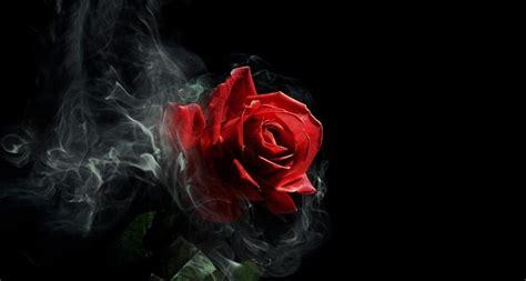 imagenes rosas dark gothic rose hd wallpaper hd latest wallpapers