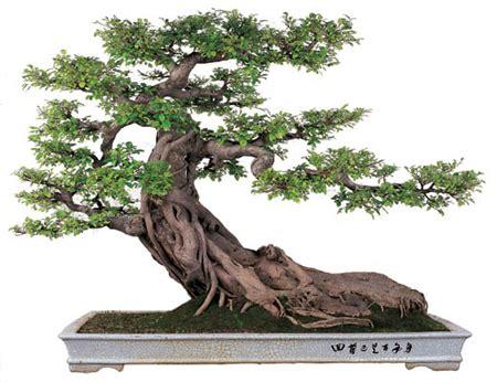 Pot Kayu Segi Enam Kawat pertanian budidaya bonsai