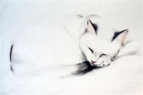 outline sleeping cat tattoo 29 best images about kellas cbell on
