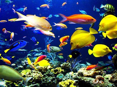tropical fish underwater world sea okean hd wallpaper