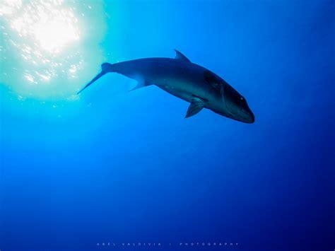 bid fish big fish and their are key parts of coral reef