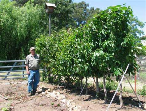 Dave Wilson Nursery Backyard Orchard by Hedgerow Dave Wilson Nursery