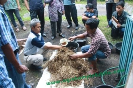 Fermentasi Pakan Ternak Dengan Tetes Tebu pakan yang sudah jadi siap diberikan pada ternak