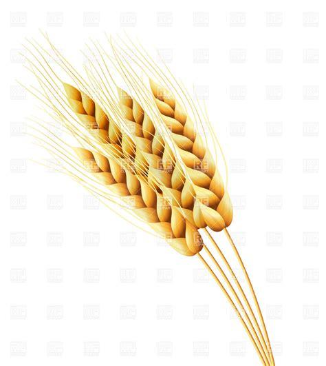wheat clip 8 wheat stalk vector images wheat silhouette clip