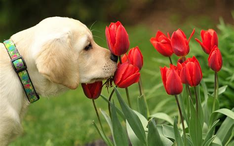puppies and flowers dogs flowers wallpaper high definition high quality widescreen