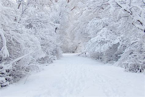 tree in snow wallpaper white snow tree hd wallpapers