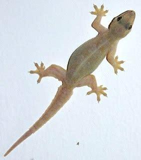 Mainan Kayu Mencari Kepala Binatang gecko itenas design by inspiration