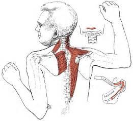 Back shoulder muscle pain reanimators