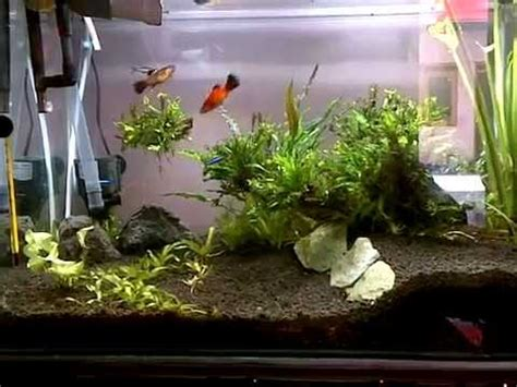 cara membuat aquascape yang sederhana aquascape sederhana simple aquascape youtube