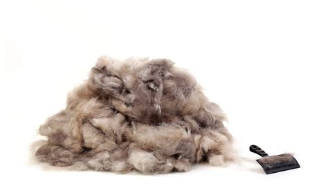 Puppy Shedding Fur by 5 Tips On How To Reduce Shedding In Dogs
